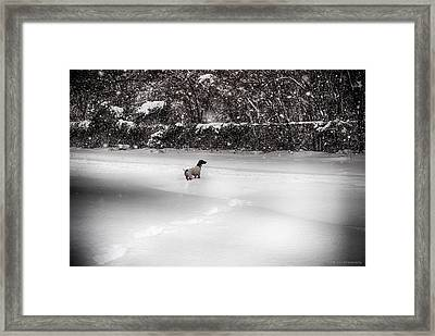Framed Print featuring the photograph Pointer In The Storm by Phil Abrams