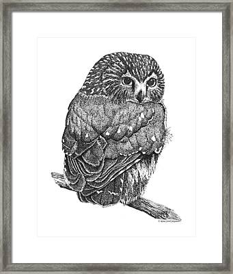 Pointillism Sawhet Owl Framed Print by Renee Forth-Fukumoto