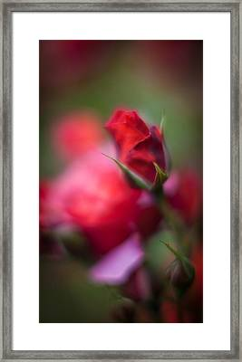 Points Framed Print by Mike Reid