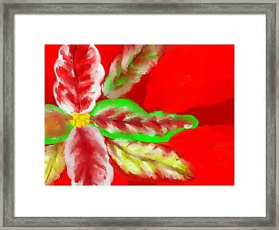 Pointsettia Framed Print by Doris Culverhouse