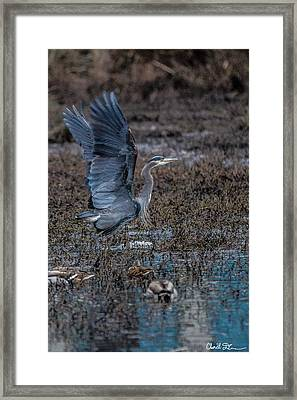 Poised For Flight Framed Print by Charlie Duncan
