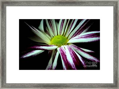 Poised Framed Print