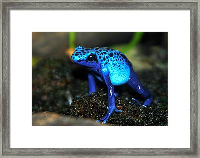 Poison Blue Dart Frog Framed Print by Optical Playground By MP Ray