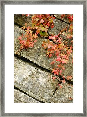 Framed Print featuring the photograph Poison Ivy by Mary Carol Story