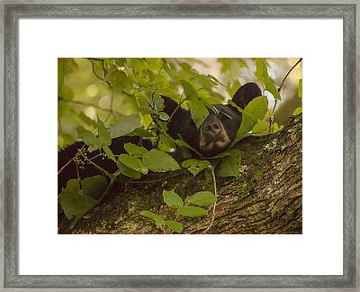 Poison Ivy Pillow Framed Print by Doug McPherson