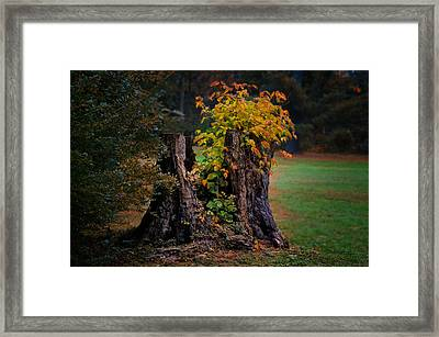 Poison Ivy Stump Framed Print by Bill Cannon