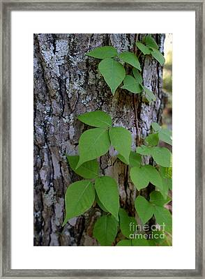 Poison Ivy Framed Print by Susan Leavines Harris