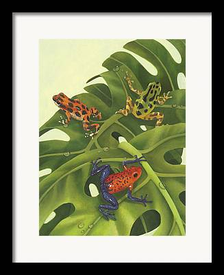 Poison Arrow Frog Framed Prints