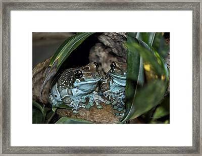 Poisonous Frogs With Sticky Feet Framed Print by Thomas Woolworth