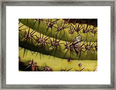 Poke Framed Print by Susan Hernandez