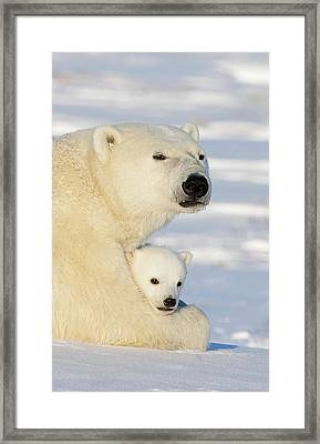 Polar Bear And 12 Week Old Cub Framed Print