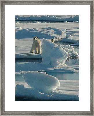 Polar Bear And Cub Framed Print by Kelley Elliott