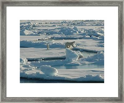 Polar Bear And Her Cub Framed Print by Kelley Elliott