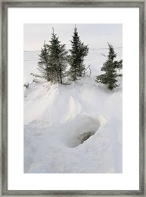 Polar Bear Den Entrance Framed Print by Science Photo Library