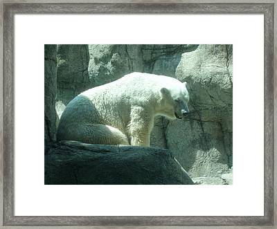 Polar Bear Framed Print by Fortunate Findings Shirley Dickerson