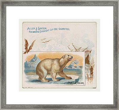 Polar Bear, From Quadrupeds Series N41 Framed Print