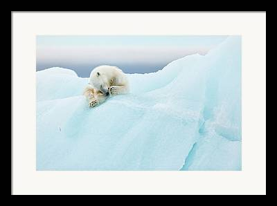 Svalbard Framed Prints