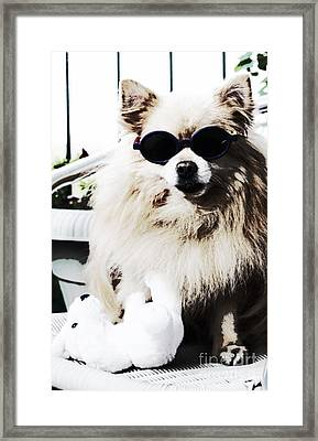 Polar Bear Helps Cool Off Framed Print by Charline Xia