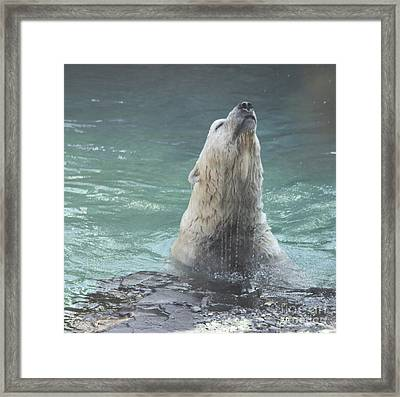 Polar Bear Jumping Out Of The Water Framed Print