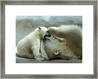 Polar Bear Mom And Cub Framed Print