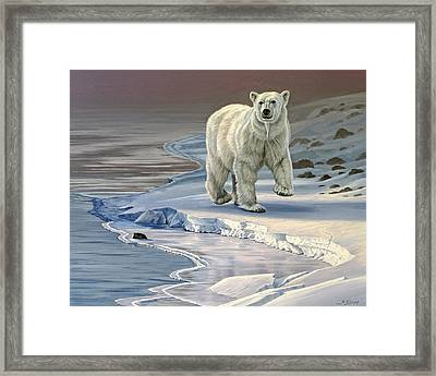 Polar Bear On Icy Shore    Framed Print