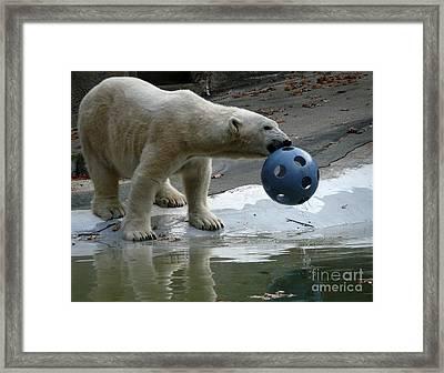 Polar Bear Play Framed Print by Avis  Noelle