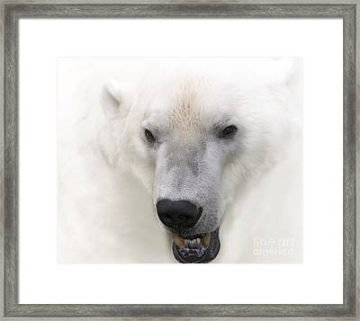 Polar Bear Portrait Framed Print by Heiko Koehrer-Wagner