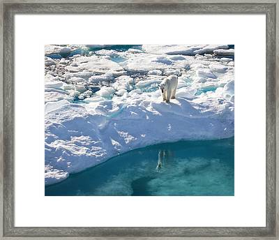 Polar Bear Reflection Framed Print by June Jacobsen