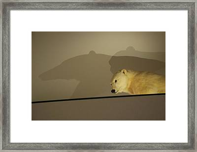 Polar Bear Shadows Framed Print