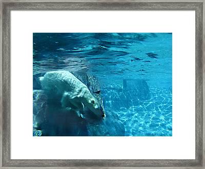 Polar Bear Framed Print by Steve Karol