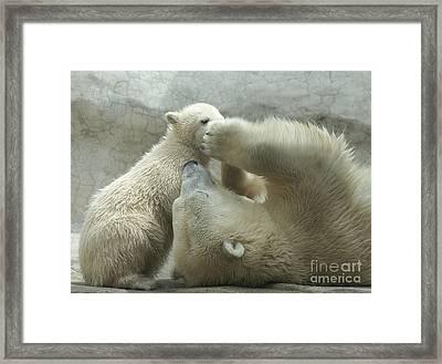 Polar Bears 4 Framed Print