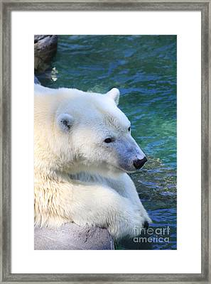 Polar Pal Framed Print
