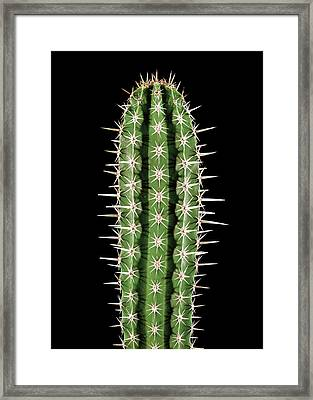 Polaskia Chichipe Cactus Framed Print by Gilles Mermet