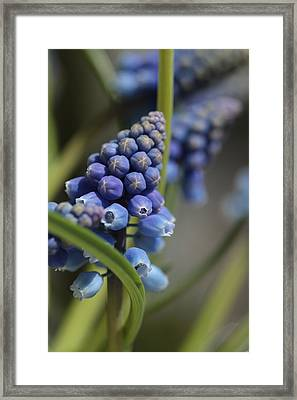 Pole Dancing  Framed Print