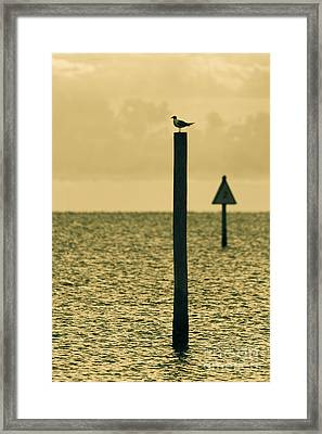 Pole Position Framed Print by Marvin Spates