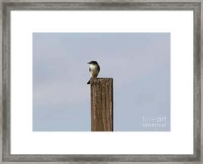 Pole Sitting Framed Print
