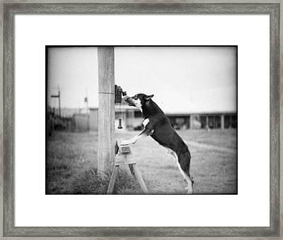 Police Dog On Phone Framed Print by Historic Photos