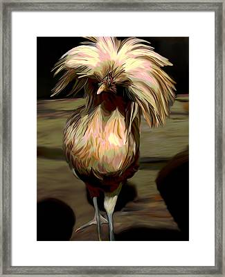 Polish Chicken 3 Framed Print by Karen Sheltrown
