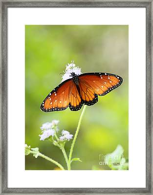 Polka Dot Queen  Framed Print by Sabrina L Ryan