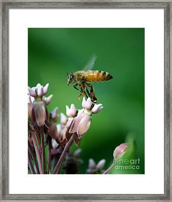 Pollen Dance Framed Print