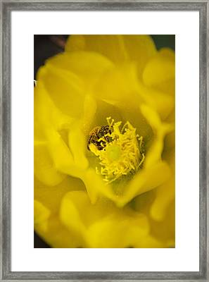 Pollen Flying Framed Print