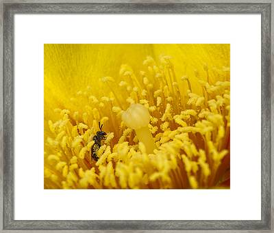 Pollen Forest Framed Print by Len Romanick