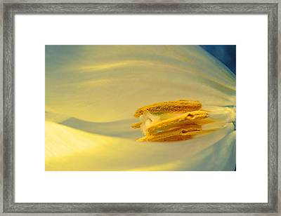 Pollen In Subtle Colors Framed Print by Beth Akerman