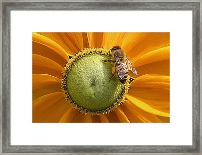 Pollen Time Framed Print