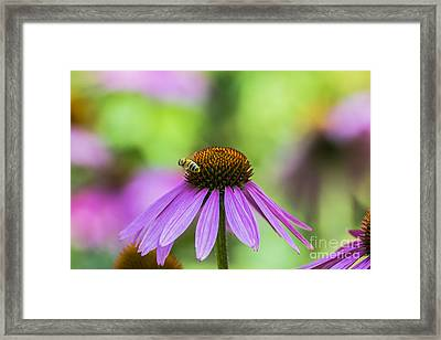 Pollen Tracks... Framed Print