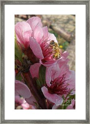 Pollinate Framed Print by Polly Anna