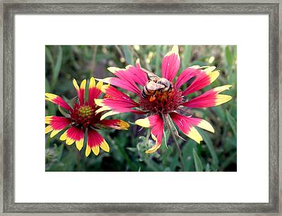 Pollination #1 Framed Print by Camille Reichardt