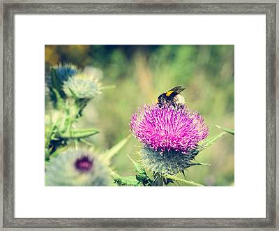 Pollination Agent II Framed Print by Marco Oliveira