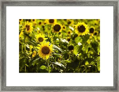 Pollination Framed Print by Harry H Hicklin