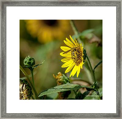 Pollination Of A Flower Framed Print